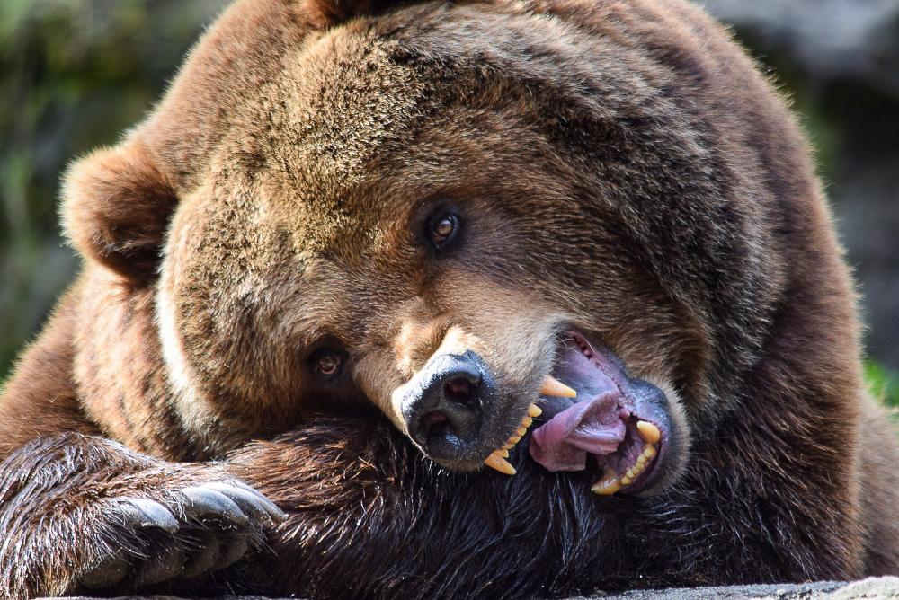 Bär (28)