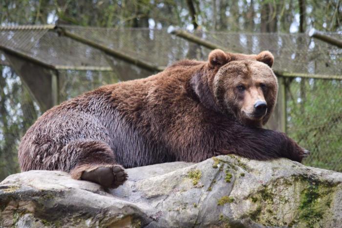Bär (10)