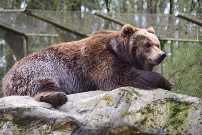 Bär (11)