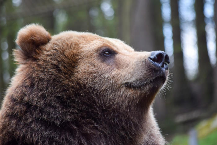 Bär (12)