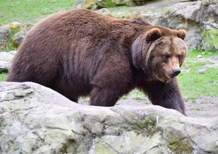 Bär (13)