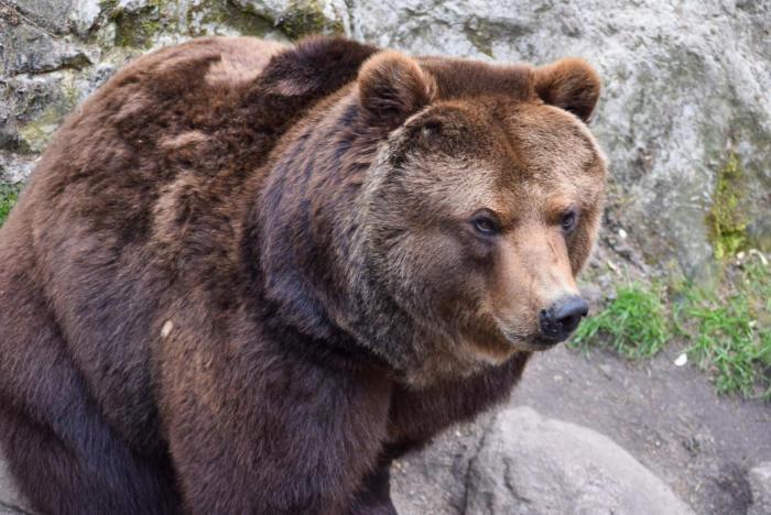 Bär (14)