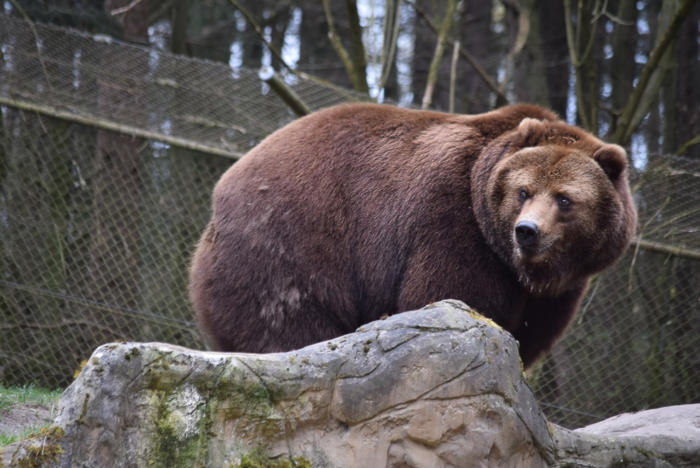Bär (15)