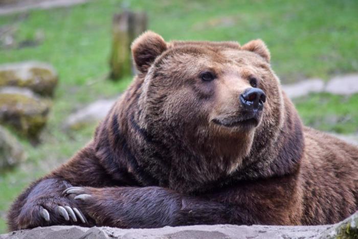 Bär (16)