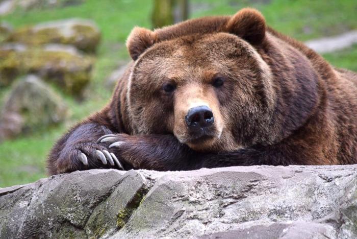 Bär (18)
