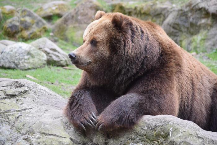 Bär (19)