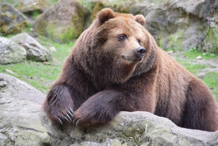 Bär (20)