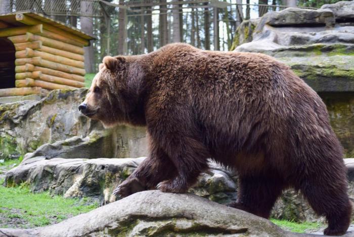Bär (22)