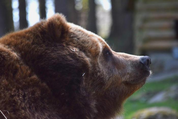 Bär (23)