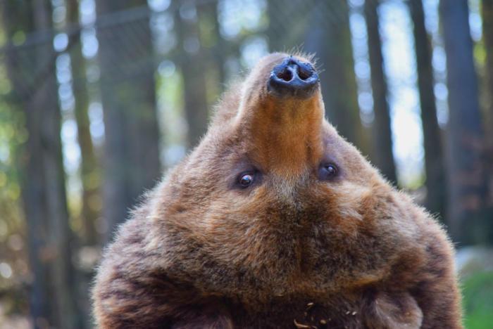 Bär (24)