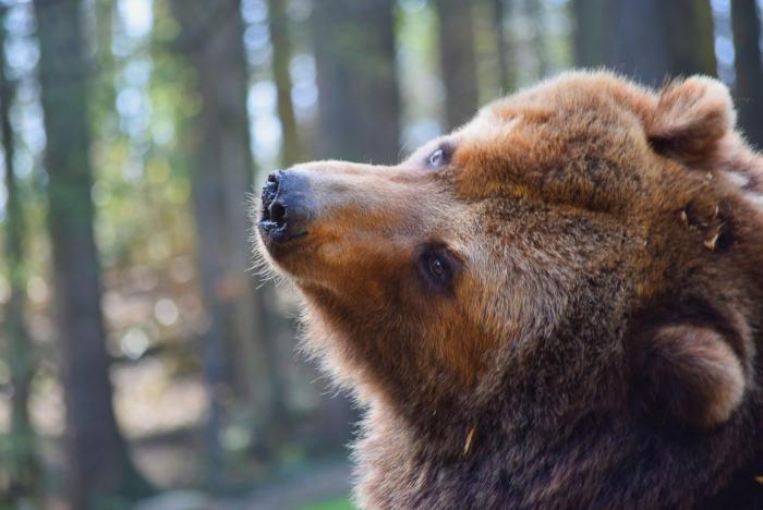 Bär (25)