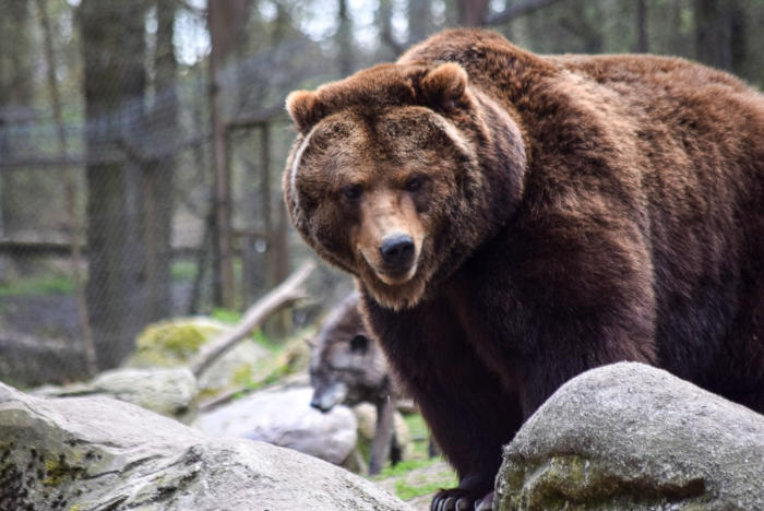 Bär (26)