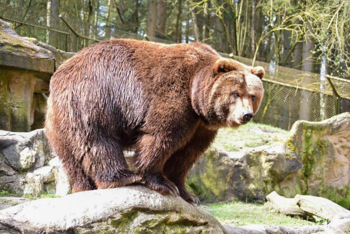 Bär (27)