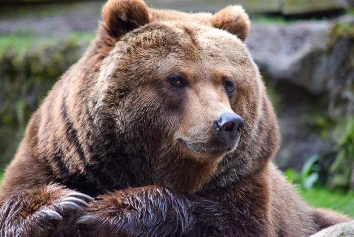 Bär (3)