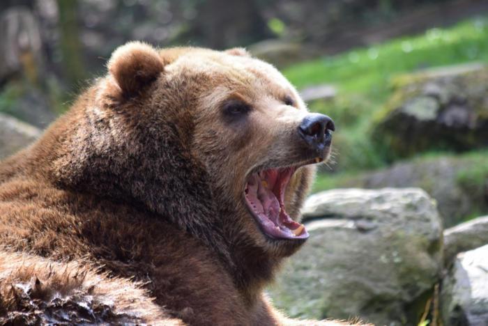 Bär (30)