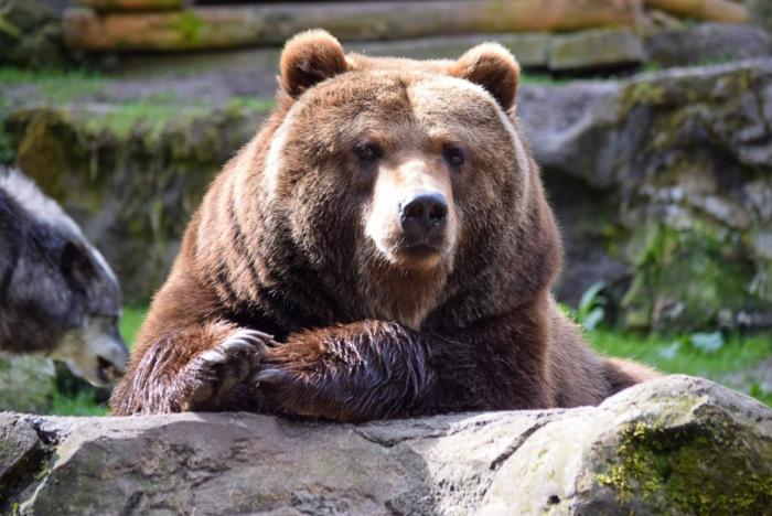 Bär (5)