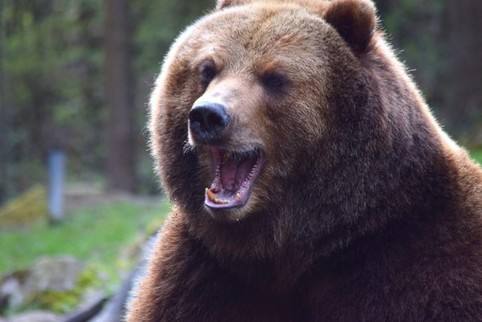 Bär (6)