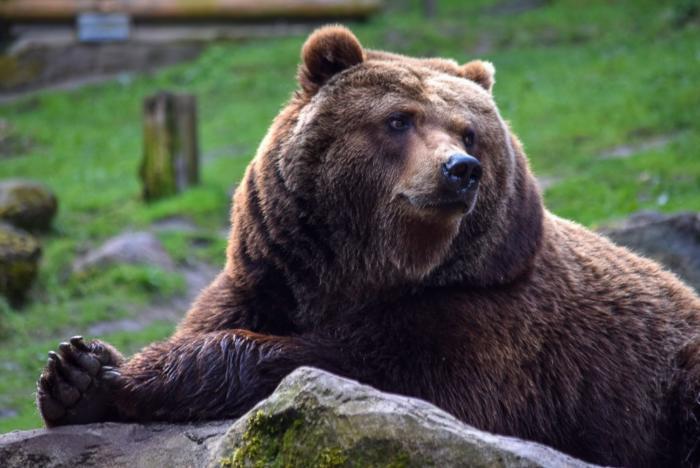 Bär (7)