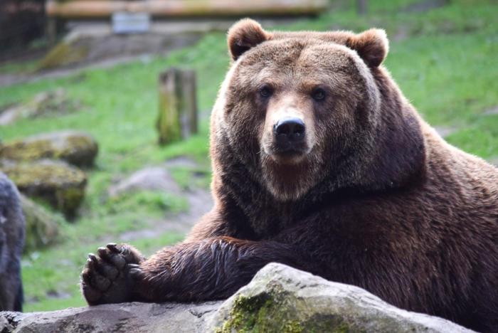 Bär (8)