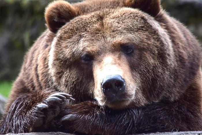 Bär (9)