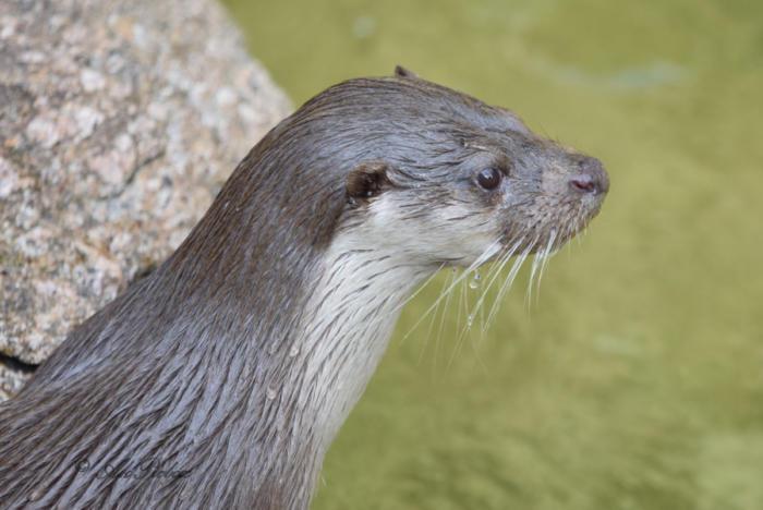 Otte (12)