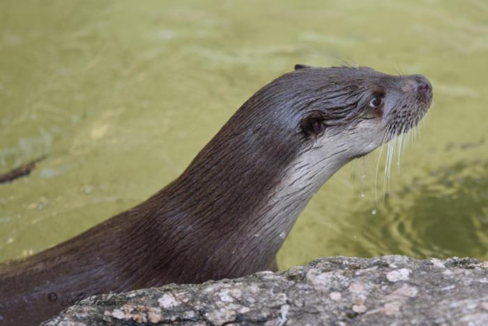 Otte (15)