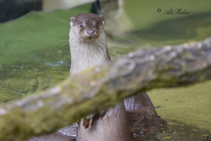 Otte (18)